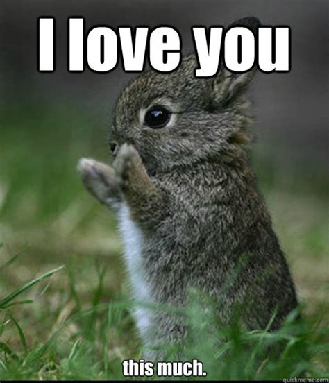 I Love You Meme - i love you this much dis much bunny quickmeme