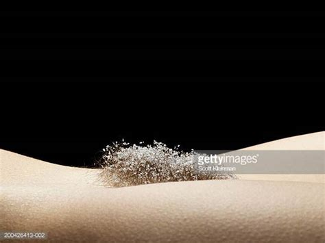 hair women pelvic pubic hair stock photos and pictures getty images
