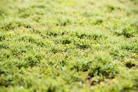 Moos Im Rasen Was Tun 4355 by Moos Im Rasen Dauerhaft Entfernen
