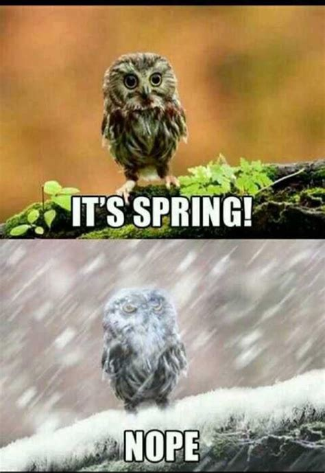 Funny Spring Memes - 16 funny memes about spring funny memes memes and spring