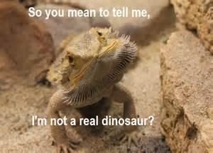 Bearded Dragon Meme - 30 bearded dragon memes to make you smile animalpages