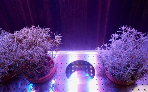 indoor lighting that mimics sunlight integrated indoor edible and ornamental indoor gardens at