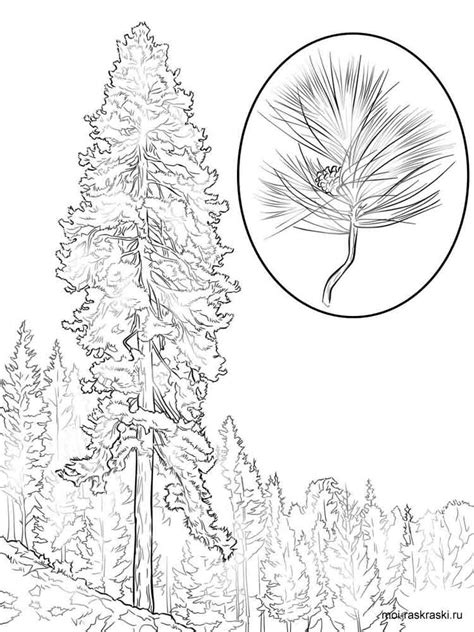 coloring page of pine trees pine tree coloring pages for kids free printable pine