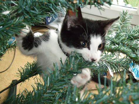 cat first seen christmas tree 13 things only cat owners can understand