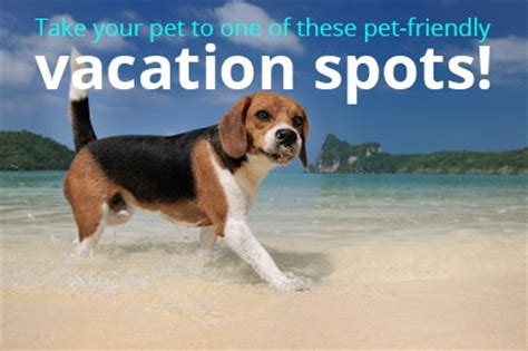 dog friendly beach house the 4 best pet friendly vacation destinations in america