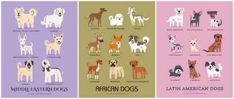 types of dogs and their personalities adorable drawings of breeds grouped by their place of origin