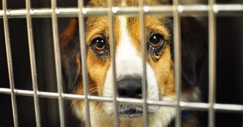 puppy shelters in nj new jersey passes new that requires pet stores to sell
