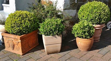 vasi da giardino grandi dimensioni vasi grandi da giardino come sceglierli e collocarli