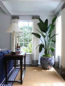 Living Room Plants Walmart 25 Best Ideas About Large Indoor Plants On