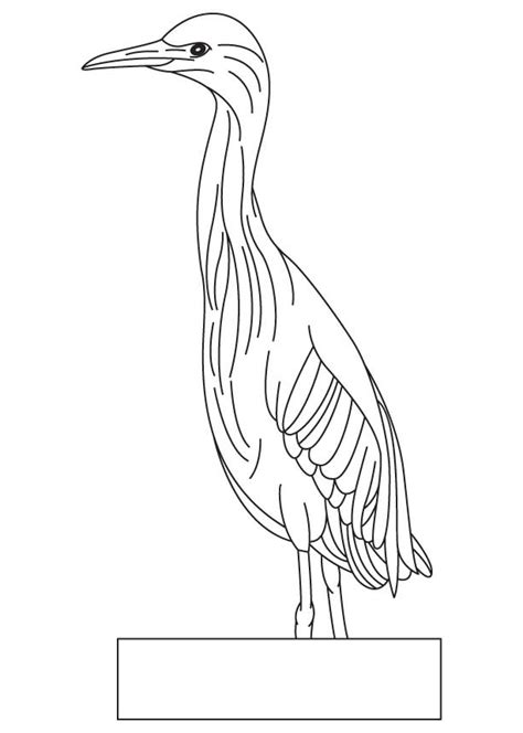free coloring pages of brown thrasher