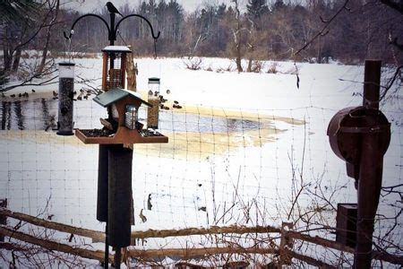cornell bird watching website 8 best critter webcams images on 100 yards alaska usa and backyard birds