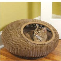 cool cat beds 1000 images about stuff for cats on pinterest cool cats