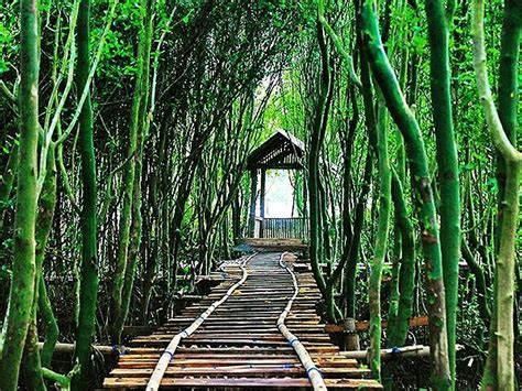 Hardisk Di Els Jogja wana tirta mangrove jogja swiss belhotel yogyakarta