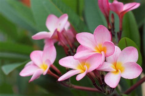 fiori di appartamento piante da appartamento quali dove come