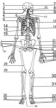 blank skeletal system diagram quiz