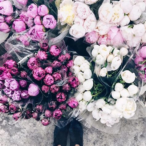 instagram pinkpeonies peonies are the new avocado you heard it here first