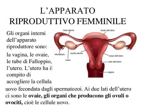 apparato genitale femminile interno apparato riproduttore