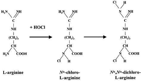 Proposed structures of chlorinated L-arginine products ... L Arginine Structure