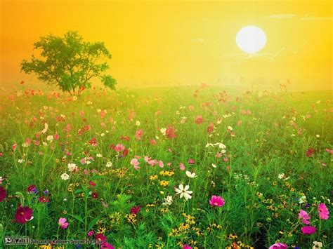 amazing pictures of nature amazing wallpapers amazing nature wallpapers national geographic wallpaper