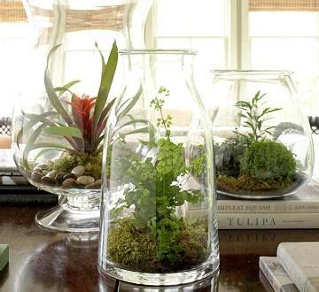 plant a beautiful terrarium