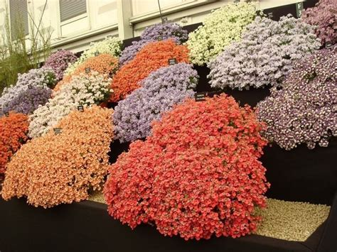piante da fiore invernali piante da fiori piante da giardino piante da fiori