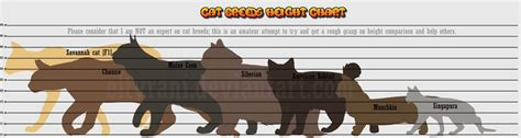 breed height guide to cat breed heights by eltyranda on deviantart
