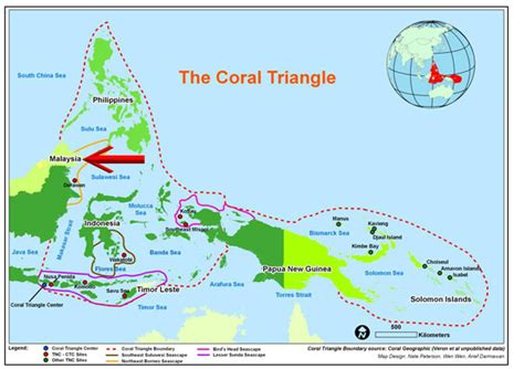 New corals being exported from East Malaysia, Borneo, just inside the Coral Triangle blastomussa