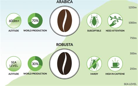Coffee Robusta what s the difference between robusta and arabica coffee the pilot s