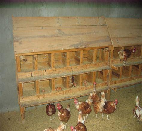 gabbia galline ovaiole tipo familiare preparazione per galline ovaiole da vermi