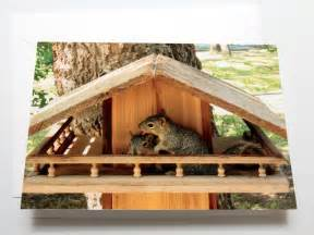 squirrel house plans bob s backyard nature photo greeting cards