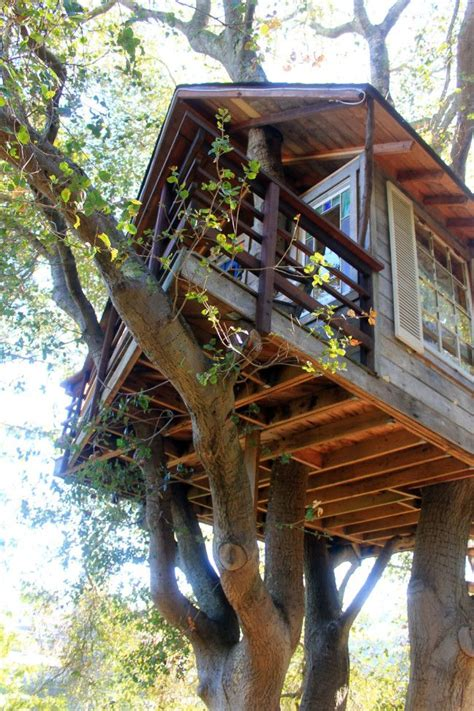 awesome tree houses 25 best ideas about amazing tree house on pinterest tree houses beautiful tree