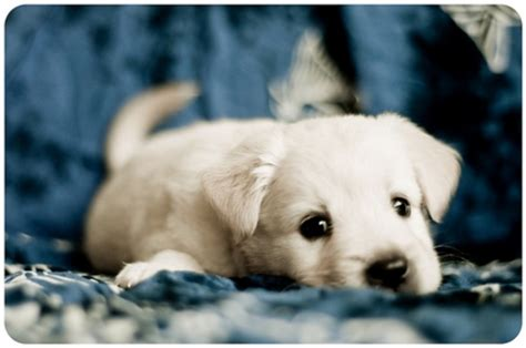 puppy waiting puppy that will melt your cuteness overflow