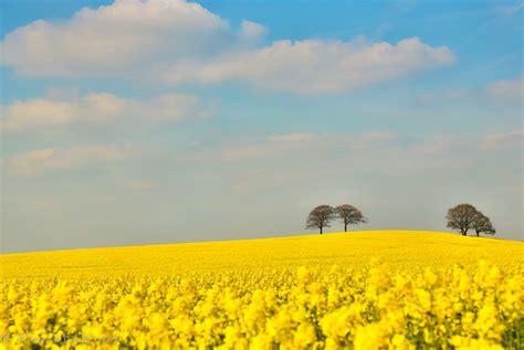 acid yellow landscape alvecote wood