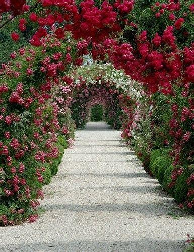 beautiful walkway beautiful nature pinterest