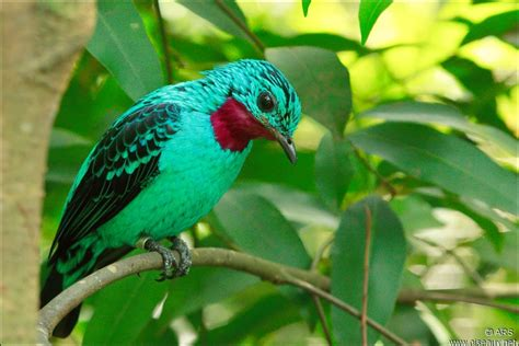 libro drle doiseau quizz les oiseaux multicolores quiz oiseaux couleurs