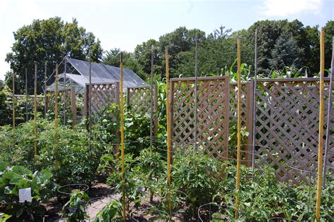 Garden Trellis And The Vines Keep Climbing Arb Nature Notes