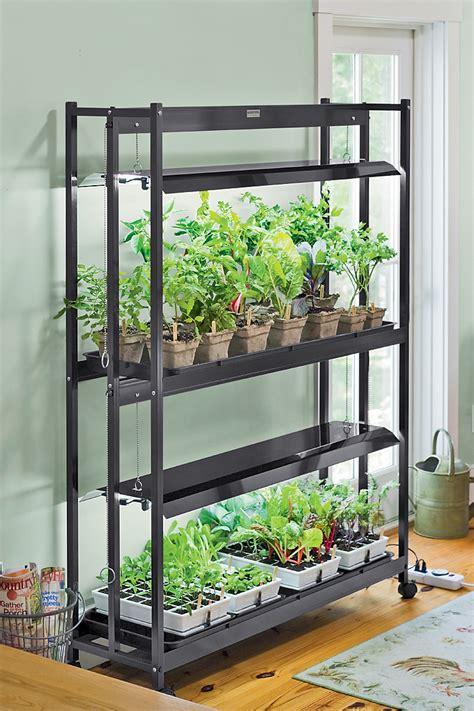 Growing Lettuce Indoors: Best Types of Lettuce, Variety