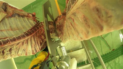 cutting person games action game style footage of a butcher skinning a cattle
