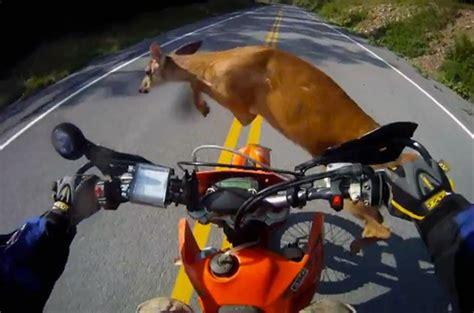 motorcycle hits deer 85 mph helmet cam rally motorcyclist hits deer shrugs it off keeps going
