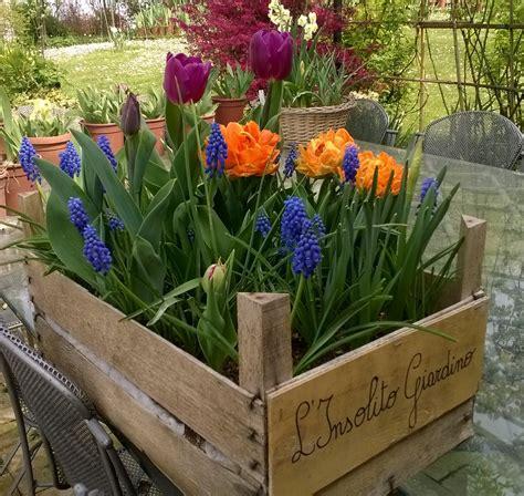 fiori rari l insolito giardino piante e fiori rari e speciali