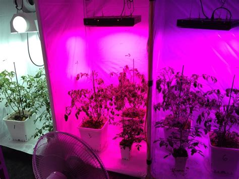 Best Led Grow Lights To Grow Tomatoes And Vegetable Plants