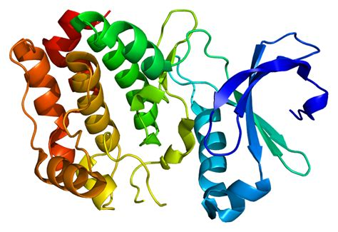 protein kinase serine threonine specific protein kinase wikiwand