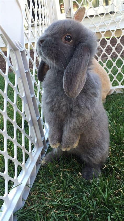 devrabbits albums imgur best 25 cute baby bunnies ideas on pinterest baby