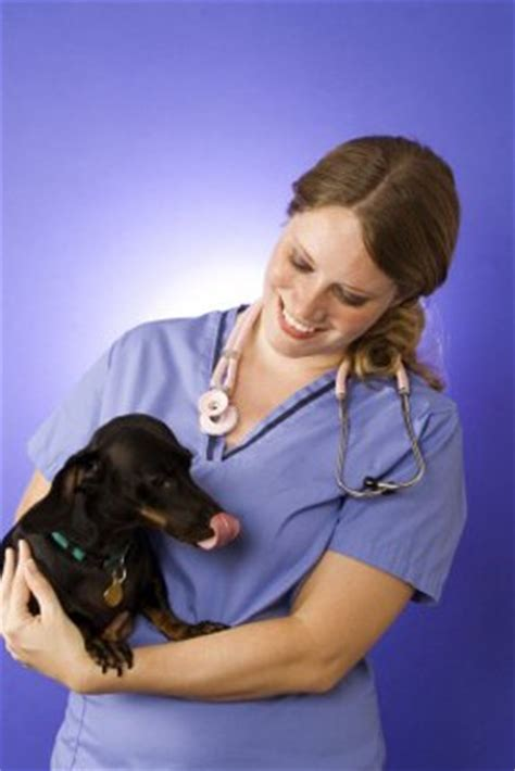 neurological problems in dogs neurological disorders in dogs the dogington post