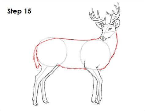how to a deer how to draw a deer better