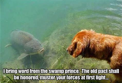 Muster Your Forces At Light Animal Pictures Of The Day 24 Pics Meme On Daily Lol Pics