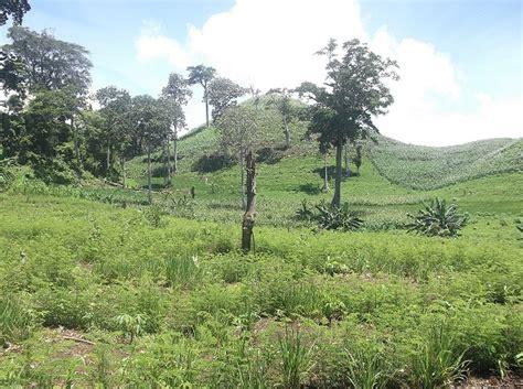 gambar gratis ladang  pinggir hutan  atas pegunungan