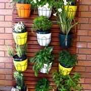 piante alte da terrazzo piante da balcone sempreverdi piante da terrazzo