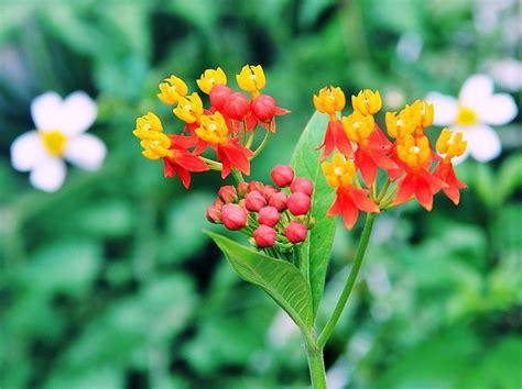 imagenes flores silvestres silvestres imagui