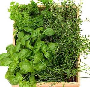 herb garden plants planting a herb garden tips www coolgarden me